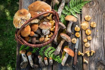Fototapeta Edible wild mushrooms straight from the forest obraz