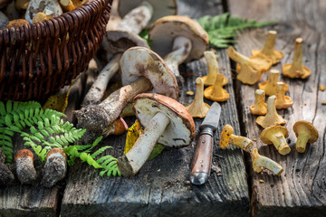 Fresh wild mushrooms full of flavour and aromatic