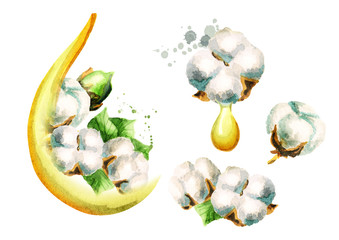 Cottonseeds oil set. Watercolor