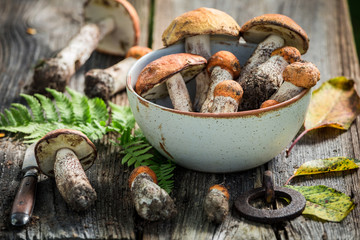 Healthy wild mushrooms collected in the autumn