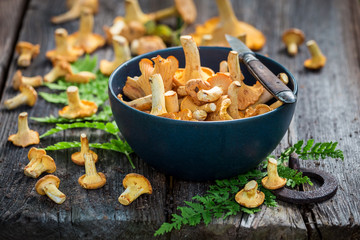 Raw wild chanterelle mushrooms freshly collected from the forest