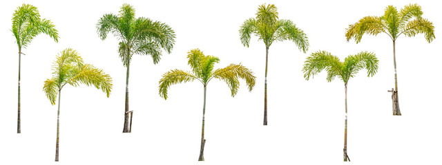 Collection of palm trees isolated on white background for use in architectural design or decoration work.