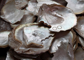 Shells with cut out buttons are seen at Austria's only mother of pearl buttons and jewellery production facility in Felling