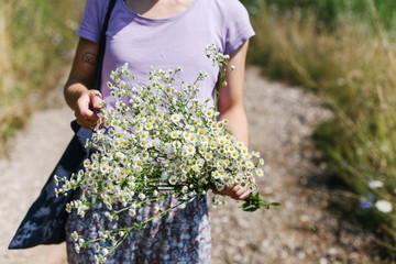 Female person holding bouquet of chamomile