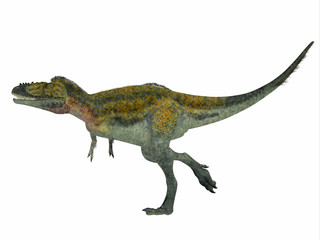 Alioramus Dinosaur Side Profile - Alioramus was a carnivorous theropod dinosaur that lived in Asia in the Cretaceous Period.