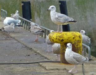 Eine Gruppe Möwen am Hafen