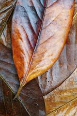 Pile of brown leaves