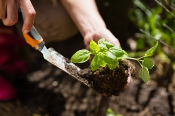 Close-up of woman planting sapling in garden