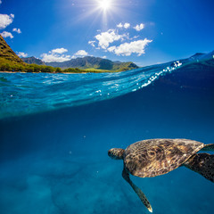 Turtle under water line in sea under blue sky