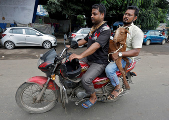 Men carry a goat on a motorcycle after it was purchased from a livestock market on the eve of the Eid al-Adha festival in Kolkata