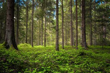 Fröhlicher Wald