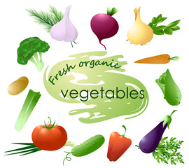 Set vegetables-color illustration.