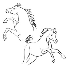 Stallions contour on white background, vector illustration