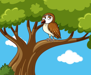 Owl stands on branch at daytime