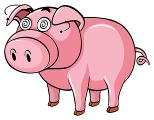 Dizzy pig on white background