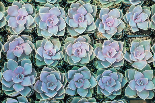 Dreamy cute botanical california succulents in pots arranged in a tray at a greenhouse ready for an urban garden