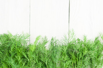 Row of green fresh raw dill on old wooden white rustic planks