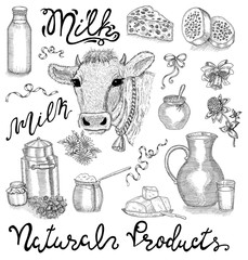 Black and white design set with cow head, dairy natural products and lettering on white. Hand drawn design illustrations