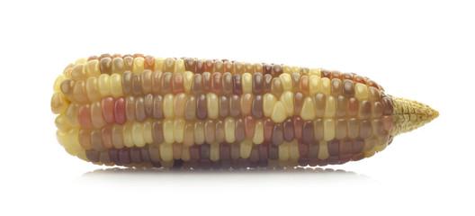waxy corn on white background