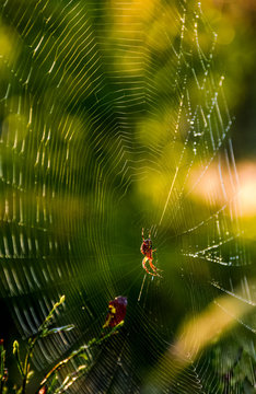 spider in the web on beautiful foliage bokeh