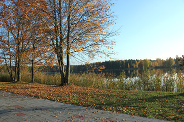 Path by a lake in autumn with falling leaves