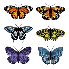 Vector set with isolated butterflies. Hand drawn design