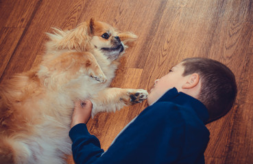 A child plays with a dog in a cozy warm house. The boy and his faithful friend Pekingese. The role of animals in the lives of children and families