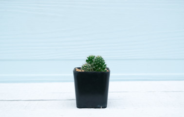 Cactus in pot on a wooden floor background
