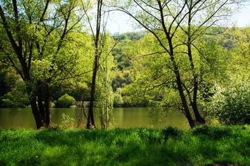 grüne Landschaft im April bei Kröv an der Mosel