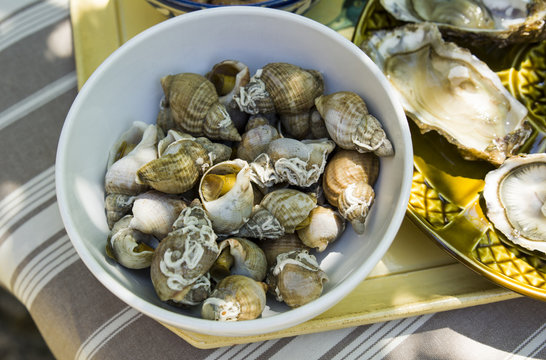 Whelks, bulot,sea snails, in small a bowl on the table