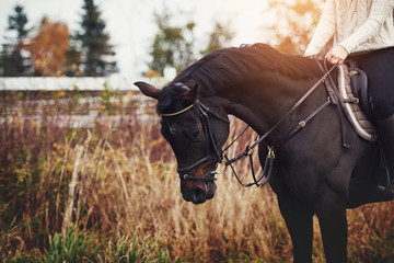 Chestnut horse and rider standing in an autumn pasture