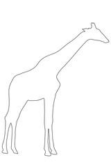 Outline of an african Giraffe - Digitally Hand Drawn Illustration