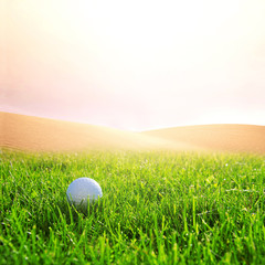 Golfball on the golf course.