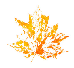 Autumn maple leaf. Drawing by paints. Element of design.