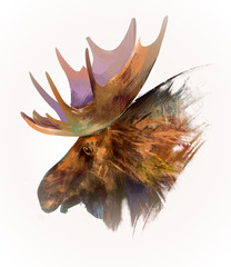drawn isolated animal head moose