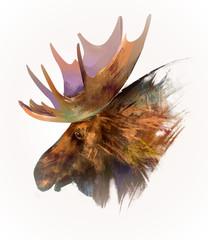 drawn isolated animal head moose