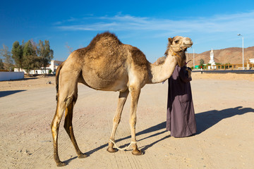 Camel owner in Hurghada, Egypt