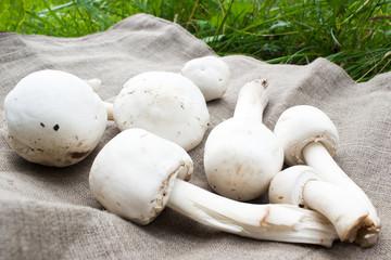 A few Mushrooms on cloth. Champignons.