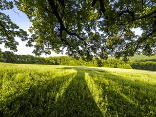 Alte Eiche, Österreich, Wien, Wienerwald, Exelberg