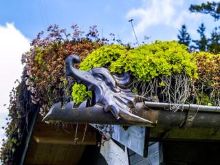Dachbegrünung mit Sedum, Art, Österreich, NIederösterreich, W