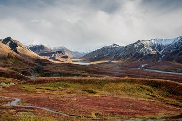 Wall Murals Deep brown Fall color on the Alaska tundra with snowy mountains