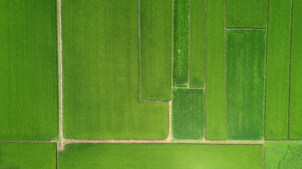 田園風景 俯瞰撮影