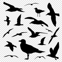 Black silhouette set of seagull on transparent background vector