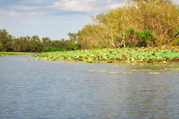 Corroboree Wetlands in Northern Territory, Australia.