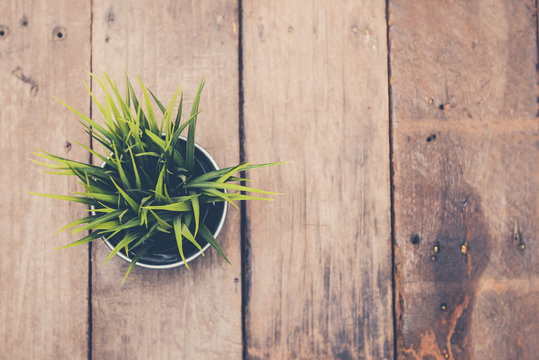 Top down view of green plant on old wood floor with vintage retro filter effect. For background,