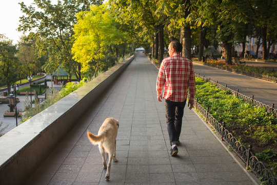 young man walking with labrador dog at park in the morning