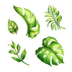 watercolor botanical illustration, green tropical leaves, jungle foliage, forest clip art, nature set, isolated on white background