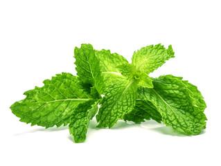 the fresh mint leaf on white background