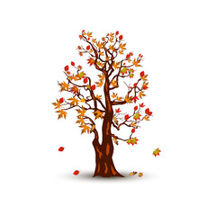 Autumn tree with maple leaves, cartoon on white background.