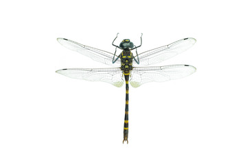Black dragonfly isolated on a white background